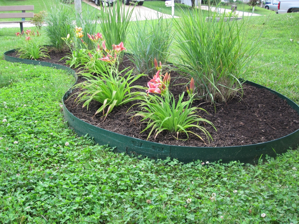 Panicum switchgrasses and daylilies baby betsy green for Green plants for flower beds